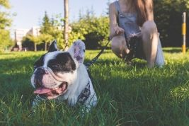 How to find a pet-sitter while traveling