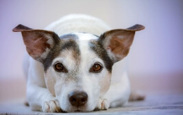 Causes of Housebreaking Accidents by Pets