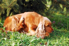 A Pet Owner's Guide to Fleas & Ticks