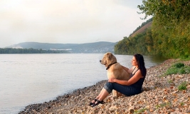 Travel with pets - safety tips