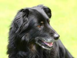 How to Help Aging and Senior Pets