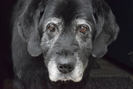 Saying Goodbye: Euthanizing Your Pet