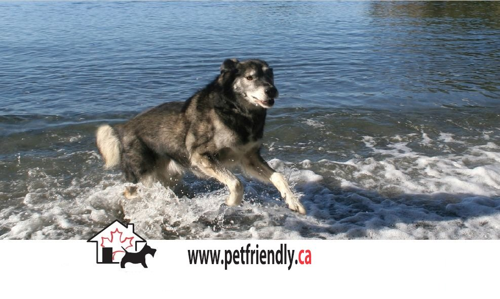 Pet Friendly Hotels Lodging Accommodations And Vacation Rentals In