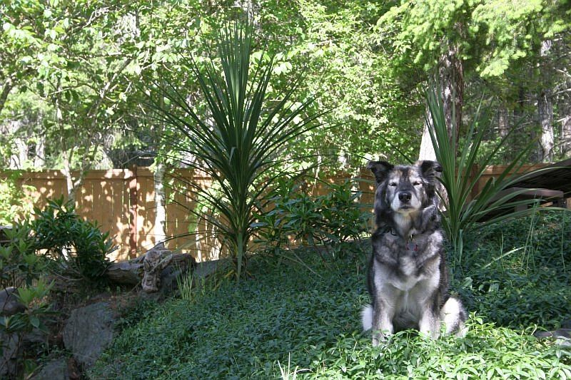 Ontario Pet Friendly Lodging Hotels And Accommodations