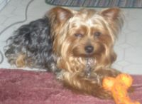 Odie, Featured Pet