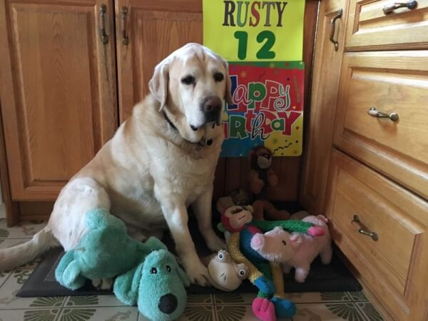 'This is our sweet boy Rusty celebrating his 12th birthday!' - Janet from Toronto