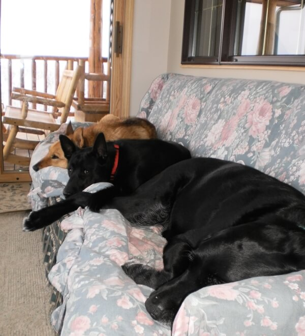 'The posse at quiet time. Lady, Rascal & Dawson relax on their space.' - Rod W.