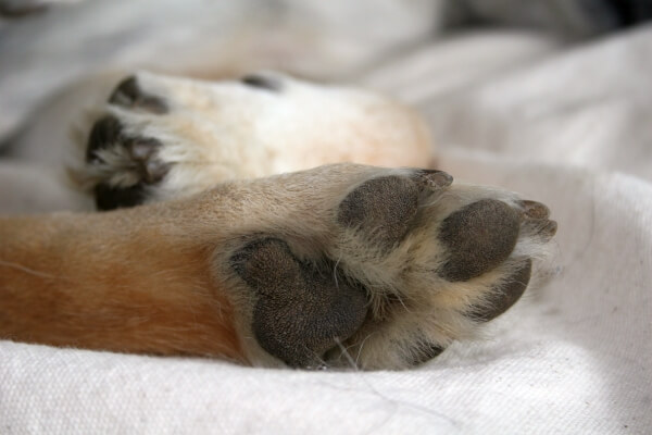 'My lovely old dog's paw, a photo I took as he was snoring away a warm afternoon.' - Mel from Vancouver