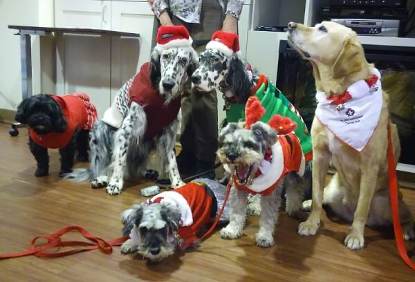 'Our annual Santa Paws Parade at work featuring: Piper, Edison, Ziggy, Nani, Bo & Bella' - Jennifer A.