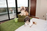 Pet-friendly accommodation in Charlottetown,   Prince Edward Island: The Holman Grand Hotel