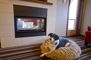 Pet-friendly Hotel or Motel in Whistler